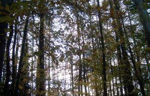 Marlay Park trees