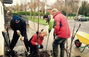 Planting at tree