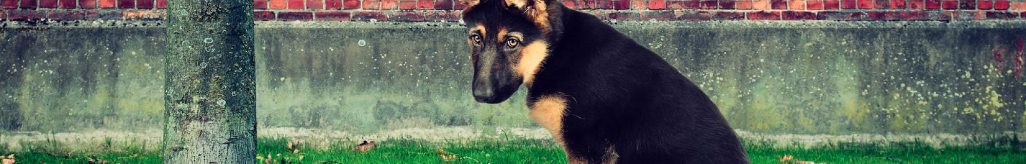 dog fines