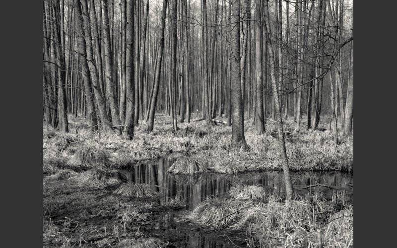 Black and White photograph of trees