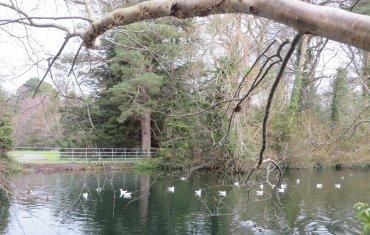 Marlay Park Lake